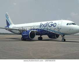 Hiring in Indigo Airlines Job Opened for full time job