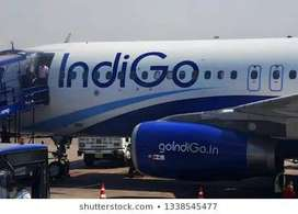 JOB JOB JOB JOB Indigo Airline JOB - Apply now only interested candida