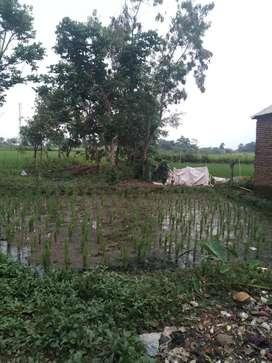 Tanah kurang lebih 8 tumbak lokasi munjul