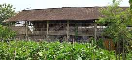 Tanah & bangunan kandang ayam