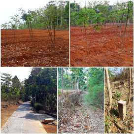 Tanah Karanganyar Murah 3281 m2 Dekat Bakal Kampus UNS Baru