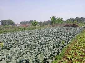 Tanah Kavling Ciwaruga dekat Pesantren Daarut Taufid dekat Cihanjuang