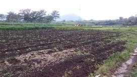Tanah Tomohon Wawo