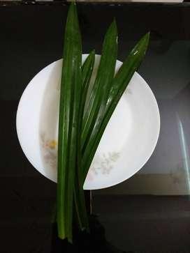 Ramba leavesFlavored BIRIYANI leaves or pandan leaves