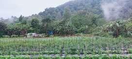 Jual tanah dekat Bedugul Bali Luas 121are harga 50jt/are Nego!