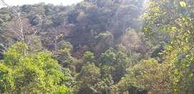 resort/agriculture land,