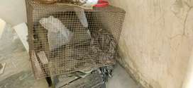 Birds cage brds available for sale for cheap cost
