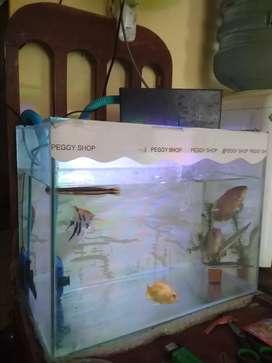 Aquarium fullset + ikan