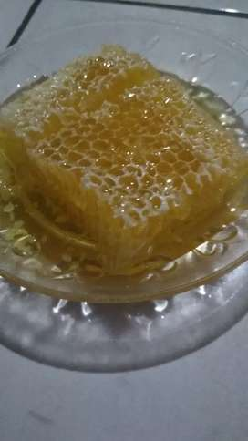 Sarang madu melifera murni 100%