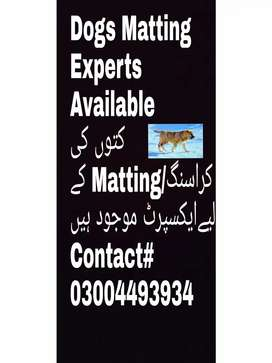 Dogs Matting experts available