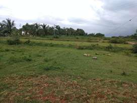 48 acres of coconut agriculture land for sale on Mysore-Malvalli road.