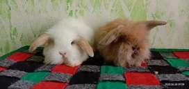 Dunia kelinci lucu