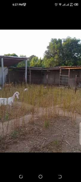 Rent for Cattle farm