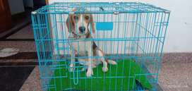Dog and cat cage Available @ Pet Shop