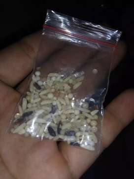 Batu Embun Putih