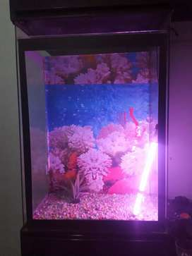Complete Aquarium with water maciene tube light and flowers