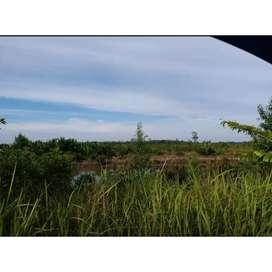 Jual Cepat Tanah 1 hektar SHM