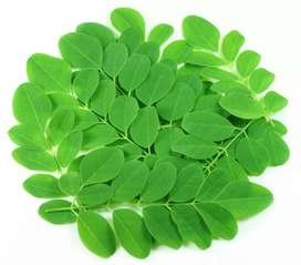 Dry Moringa Leaves are Available
