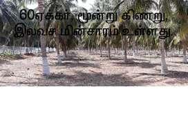 Coconut farm for 60acre sale