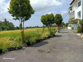 Buc tnh 1are view sawah lingk perum abianbase dkt dalung/canggu jl5mtr