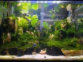 Aquascape full ekosistem