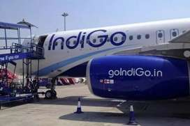 URGENT REQUIRMENT IN INDIGO AIRLINES