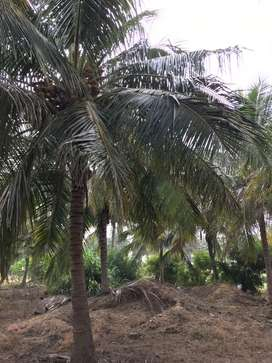 Agricultural land/agri land/coconut farm/farmland/farmhouse/land