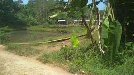 Dijual Tanah Empang 1500 m2 Pinggir Jalan Desa, Ciseeng - Bogor