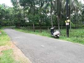 വല്ലപ്പുഴ,ചൂരകോഡ്,133 സെന്റ് തെങ്ങിന്തോപ്