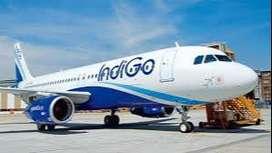 huge vacancy opened in indigo airlines apply fast