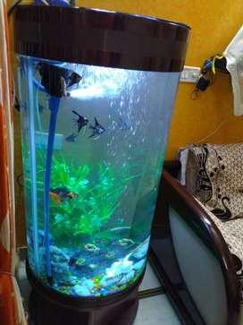 Fish acquarium