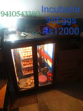 Incubator for sell