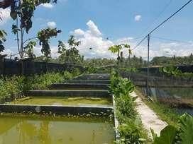 Tanah nyaman dan asri bonus kolam pembenihan seyegan