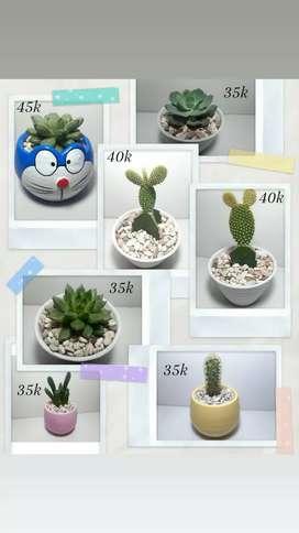 Kaktus sukulen mini