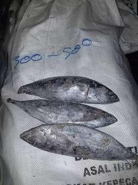 Ikan cakalang frozen
