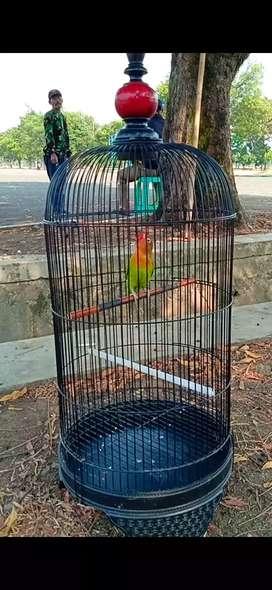 lovebird paud durasi prestasi gaya mewah