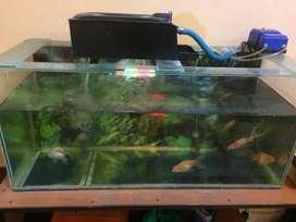 aquarium 70x35 full set