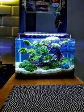 Aquascape Aquarium Akuarium Murah Indah