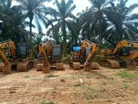 Jasa replanting kelapa sawit..