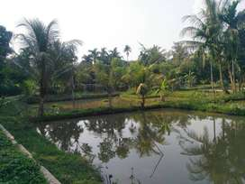 Dijual Tanah Empang Kolam Ikan 2500 m2 di Babakan, Ciseeng - Bogor