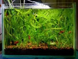Nano Planted Aquarium for sale