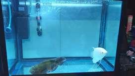 2 feet aquarium setup with spectrum light and filter