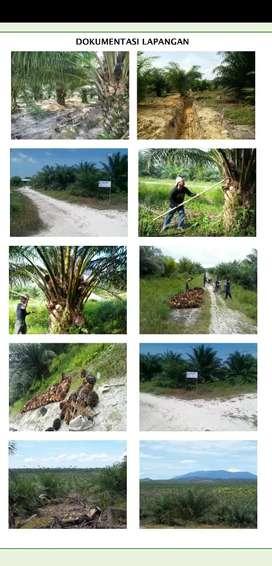 Lahan Sawit Take Over Kalimantan Barat 2000 Ha