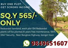 PLEASANT LIFE IN FEATURE INVESTMENT ON RED SANDAL FARM LANDS