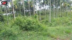 96 cent residential plot for sale Wayanad, Kaniyambetta