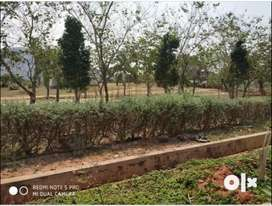 350 sqy VUDA Low budget plots for sale