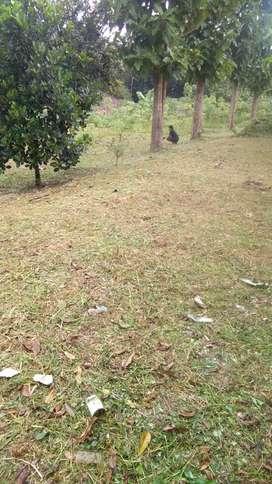 Di jual cepat tanah murah daerah cikreteg Caringin Bogor