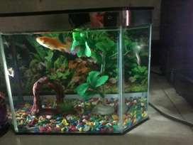 Aquarium ikan ukuran sedang
