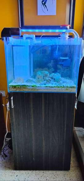 Marine Aquarium Tank Setup