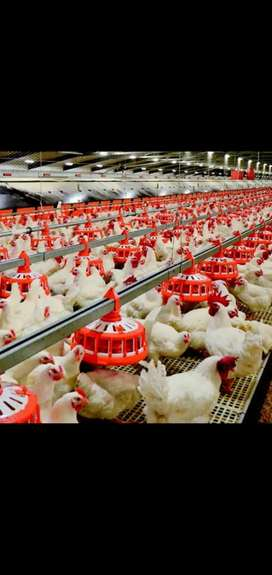 Control Shed Poultry Farm for Rent